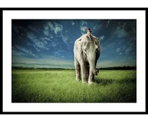 Stormposter Inramad Poster Elephant Carry Me